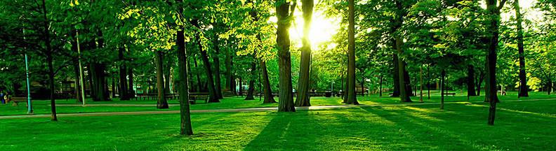 Harper Tree Consulting